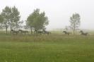 Divlji konji (Wild horses)
